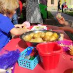 zdjęcia z Dnia Kartofla