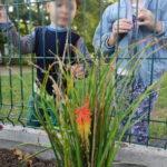 Sadzenie kwiatów w nowym ogródku